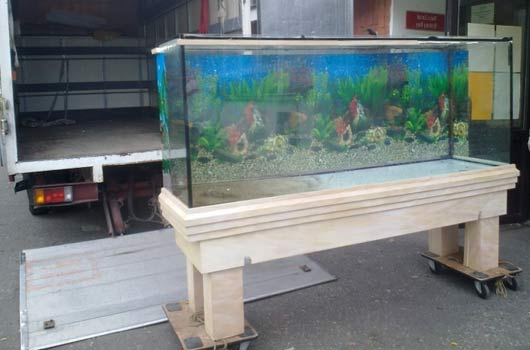 Moving a fish tank and fish for Moving fish tank